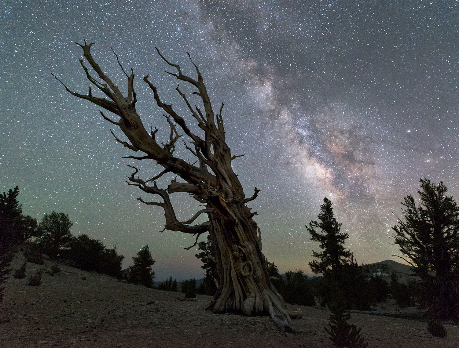 bristlecone_milky_way