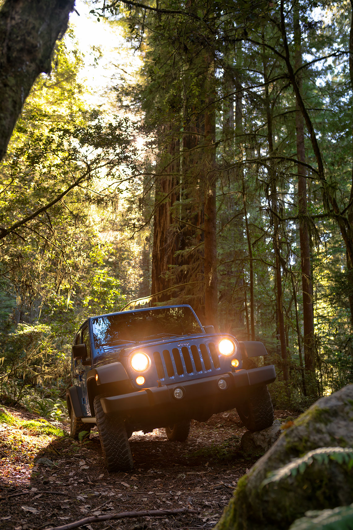 jeep_wrangler_forest_offroad