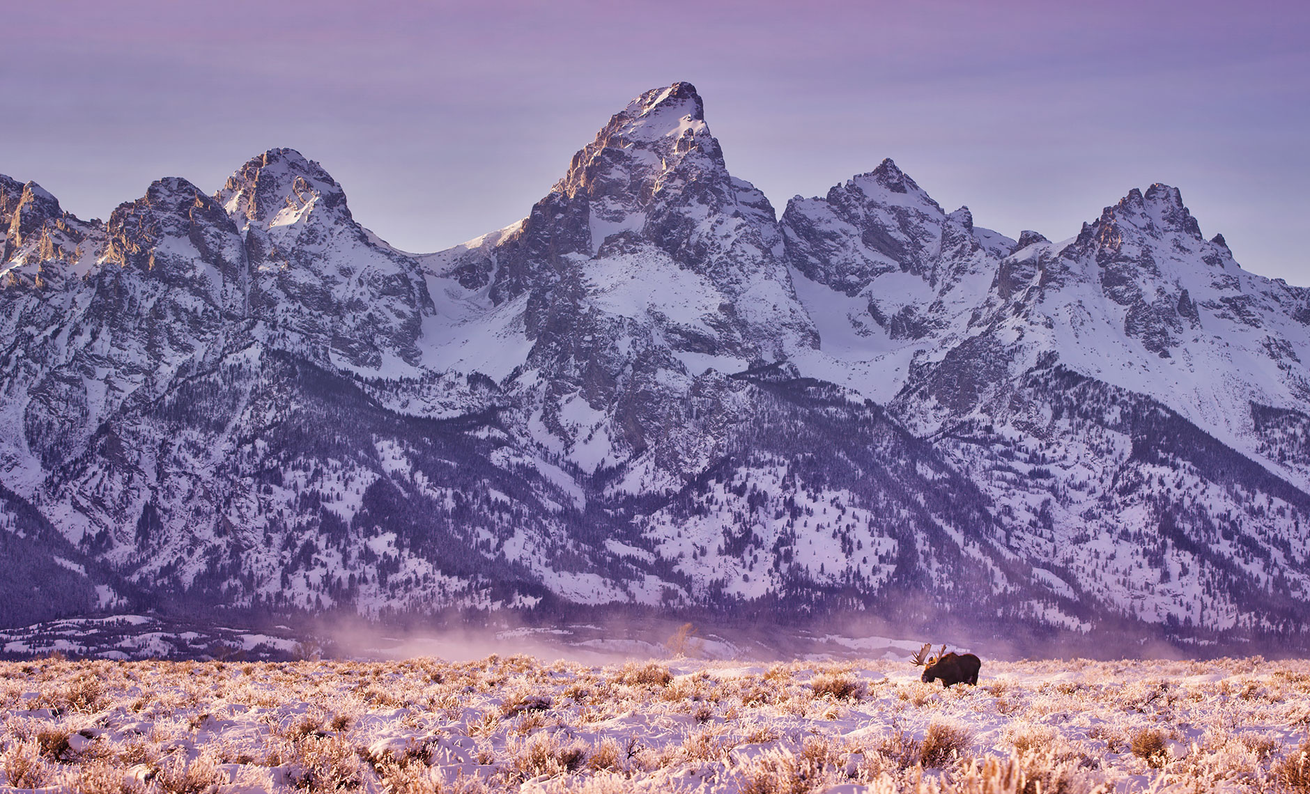 tetons_winter_moose